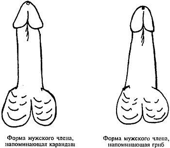 Как увеличить размер мужского полового члена экстендером
