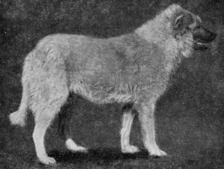 Пастушьи собаки Грузии - Страница 3 I_006