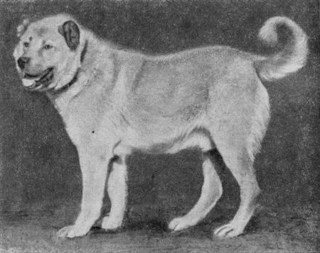 Пастушьи собаки Грузии - Страница 3 I_010
