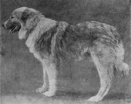 Пастушьи собаки Грузии - Страница 3 I_011