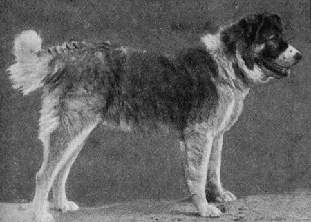 Пастушьи собаки Грузии - Страница 3 I_012