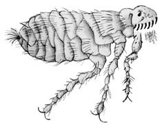 как выходят паразиты из организма фото