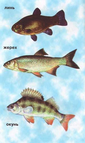 как клюет рыба после дождя
