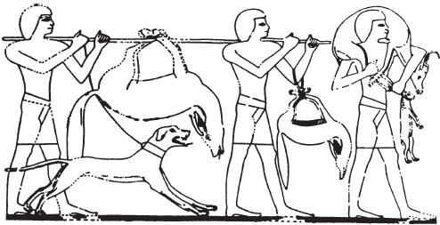 Происхождение домашней собаки и классификация пород - Страница 2 I_031