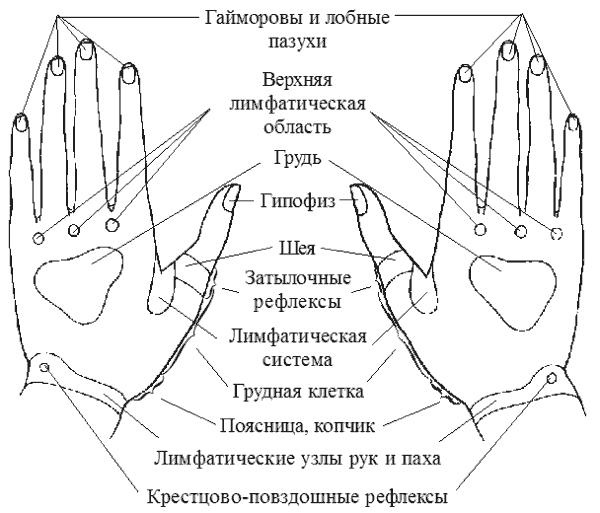 refleksogennie-zoni-vlagalisha-zhenshini